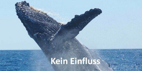 Ein aus dem Meer springender Wal